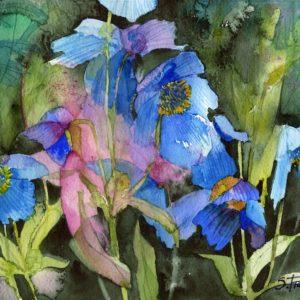 Himalayan Blue Poppy Print