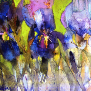 Tall Bearded Iris Print